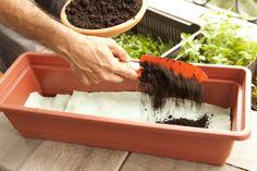 Faça uma camada de terra orgânica nos 2/3 restantes do vaso