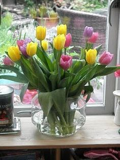 Tulips - A gift from my brother!