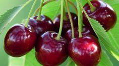 Mielőtt kidobnánk, ismerjük meg a cseresznye- és a meggyszár jótékony hatásait | Sokszínű vidék