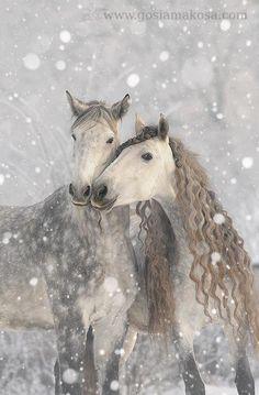 Gray Dapple Horses in Heavy Snowfall - Horse Love, lol! All The Pretty Horses, Beautiful Horses, Animals Beautiful, Horse Pictures, Animal Pictures, Animals And Pets, Cute Animals, Wild Animals, Baby Animals