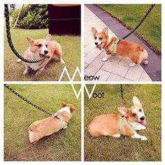 6 Feet Reflective Dog Lead, Climbing Rope Leash, Orange