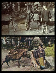 FEEDING THE DEER -- A Typical Scene at the KASUGA TEMPLE in Old NARA, JAPAN  Two variant photos from same session.     Interestingly, the profile of the Jinrikisha puller, and that of the dismounted woman, are eerily similar.     A study in half-tone conversions back in 1905
