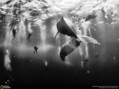 National Geographic just announced the winners of the 2015 Traveler Photo Contest. You won't want to miss this. 1.Whale Whisperers (FIRST PLACE WINNER) Ph