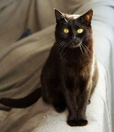 Black cat  (Mathias Schneider)