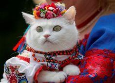 Ukrainian kitty. ❣Julianne McPeters❣ no pin limits