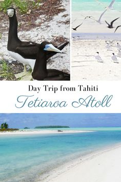 Tetiaroa Atoll: An Unforgettable Day Trip from Tahiti - Erika's Travels Caribbean Vacations, Dream Vacations, Travel Guides, Travel Tips, Most Beautiful Beaches, Underwater World, Sea And Ocean, White Sand Beach, South Pacific