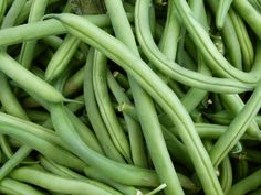 how to grow green beans in a raised bed