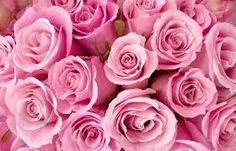 Resultado de imagem para imagem  rosas