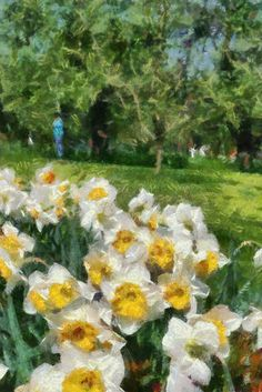 Spring In A Park. White and yellow daffodils in a park. Imitation of painting