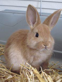 Bunny♥