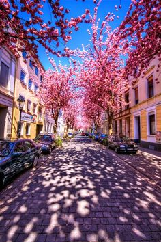 Cherry Brick Road, Bonn, Germany --a very romantic view. Bonn was the capital of the Federal Republic of Germany until 1990 when Berlin took its place. Bonn is the birthplace of the German music composer Ludwig van Beethoven. Places Around The World, Oh The Places You'll Go, Places To Travel, Places To Visit, Around The Worlds, Travel Destinations, What A Wonderful World, Beautiful World, Beautiful Places