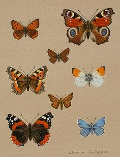 Detailed paintings of butterflies with a percentage of the sales donated to Butterfly Conservation in Devon. Butterfly Painting, Butterfly Watercolor, Butterfly Art, Butterfly Identification, Swan Pictures, Detailed Paintings, Garden Cakes, Art Sites, Animals Of The World