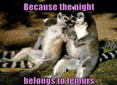 Lemur love