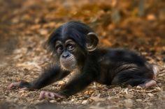 Monkey Sweet Animals Monky 1600x876 HD Wallpaper Free HQ BusinessCute Baby