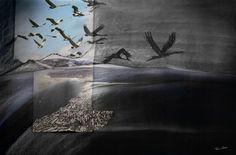 Vogelvlucht - Fieke van Dieren