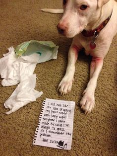 """I didn't like the idea of getting my paws wiped with baby wipes evertime I came inside because I'm allergic to grass, so I eliminated the problem."" ~ Dog Shaming shame - Problem Solver"