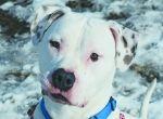 Deaf dogs adoption website!