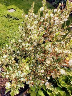 Colorful Garden, Summer Garden, Novels, Landscape, Plants, Blog, Scenery, Blogging, Plant