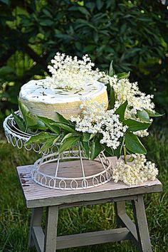 Sernik z koziego sera z kwiatami czarnego bzu