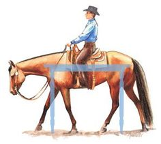 "Training Tips for Developing an Elastic ""Trampoline"" Back, Part 2: A horse with a locked back will feel as if his back is a board, stiff and unyielding, with no swing, no energy moving through. Jean Abernethy illustration"