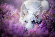 fotos de perros alicja zmyslowska 12