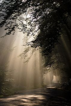 Hoge Veluwe | Flickr - Photo Sharing!