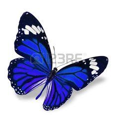 Blue Butterfly vuelo aislado en el fondo blanco, sombra suave debajo. photo