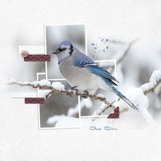 photo frame + photo background
