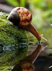 Macro photography, this is amazing! I've never seen a snail drink water Nature Animals, Animals And Pets, Funny Animals, Cute Animals, Wild Animals, Giant Animals, Animals Planet, Nature Nature, Beautiful Creatures