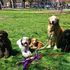 Soaking up all the vitamin D at Clarence Square - Toronto, ON - Angus Off-Leash #dogs #puppies #cutedogs #toronto #ontario #dogparks #angusoffleash