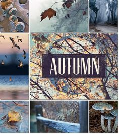 And the first frosts Inspiration Wand, Autumn Inspiration, Color Inspiration, Collages, Images Murales, Color Collage, Autumn Cozy, Hello Autumn, Happy Fall