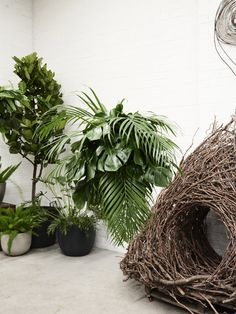 Wona Bae of Loose Leaf — The Design Files | Australia's most popular design blog.