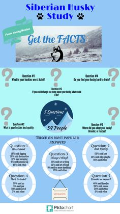 Siberian Husky Facts From Around The Globe