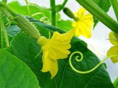 Summer House Garden, Home And Garden, Farm Gardens, Vegetable Garden, Vineyard, Diy And Crafts, Herbs, Vegetables, Flowers