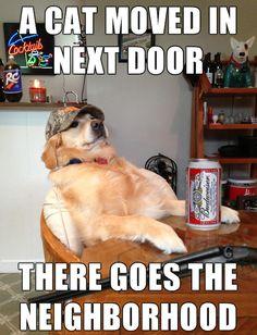 There Goes the Neighborhood #goldenretriever #ilovedogs