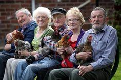 """""""Eu nunca ouvi uma ideia tão ridícula"""", diz Alan Richards. Ele procurava algo para fazer quando foi encorajado a tomar conta de uma galinha. O Henpower é um projeto da ONG britânica Equal Arts, que leva aves a casas de repouso."""