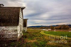 Nisqually Barns in a beautiful landscape. By Jean O'Keeffe. Wonderful details and color.