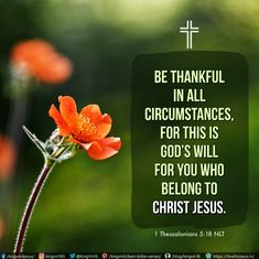 Be thankful in all circumstances, for this is God's will for you who belong to Christ Jesus. 1 Thessalonians 5:18 NLT