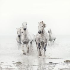 Wild White Horses Black and White by EyePoetryPhotography on Etsy, $30.00