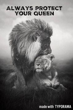 TOP 10 Emotional photos of animals. Jesus as a loving King . The Loin of Judah. It's Lion of Judah. Beautiful Cats, Animals Beautiful, Simply Beautiful, Beautiful Pictures, Animal Kingdom, Animals And Pets, Cute Animals, Wild Animals, Baby Animals