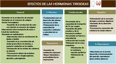 efecto de las hormonas tiroideas