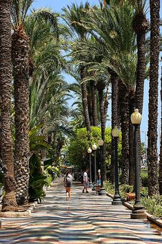 Alicante, bajo las palmeras  Spain