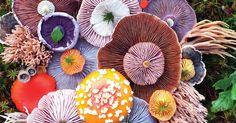 Photographer Turns Island Mushrooms Into Colorful Arrangements. #Photography