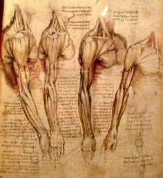 da vinci anatomical drawings | 8112938394_149647de05.jpg