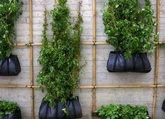 Jardim Vertical Sustentado Por Bambu