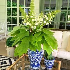 Summer Entertaining on the Porch with Cocktails!  Oakleaf Hydrangea arrangement