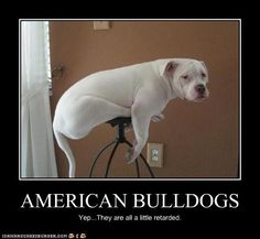 I want a dog that does crazy sh*t like this! It would fit right in ;) Bulldogs for the win.