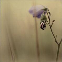 "Beatrice Lechtanski, ""Fleur escargot"""