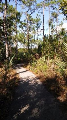 Pineland Trail, Everglades National Park Picture: - Check out Tripadvisor members' 36 candid photos and videos of Pineland Trail Everglades National Park Florida, American National Parks, Park Photos, Death Valley, World Heritage Sites, Wilderness, Trip Advisor, Trail, Beautiful Places