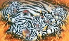WhiteTiger0138.png 2880x1720x24(RGB) #white #tiger  #animal #endangered #predator #majestic